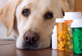 Phamaceutical drugs hurting our pets