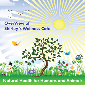 OverView of Shirley's Wellness Cafe