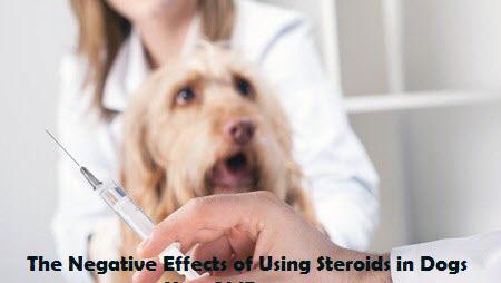 Dexamethasone Stop Side Effects Dog
