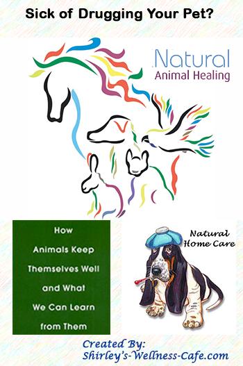 Shirley S Wellness Cafe Pet Care