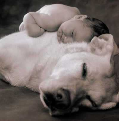 Baby resting on top of dog