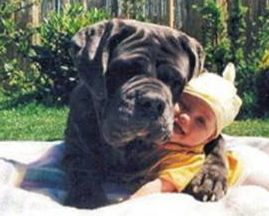 Dog and baby hugging