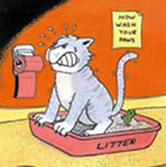 Cat sweating it out in a litter box