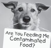 "dog with sign ""Are you feeding me contaminated food?"